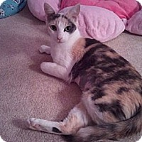 Adopt A Pet :: Scarlett - Laguna Woods, CA