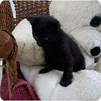 Adopt A Pet :: Barley--adopted!! - New Richmond, OH