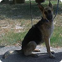 Adopt A Pet :: BELLA - SAN ANTONIO, TX