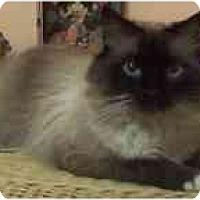 Adopt A Pet :: Prince Charlie - Arlington, VA