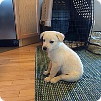 Adopt A Pet :: Daisy - Saskatoon, SK