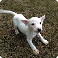 Adopt A Pet :: Patch - Bedford, VA