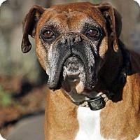 Adopt A Pet :: Logan - Woodinville, WA