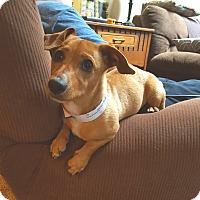 Adopt A Pet :: Lanier - New Oxford, PA
