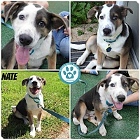 Adopt A Pet :: Nate - Kimberton, PA