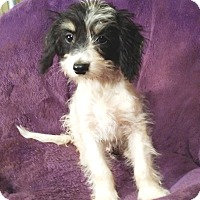 Adopt A Pet :: Bandit - Lawrenceville, GA