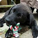 Adopt A Pet :: Pepper
