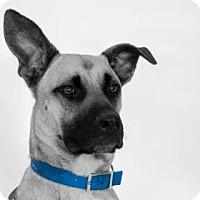 Adopt A Pet :: Koda - Suwanee, GA