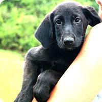 Adopt A Pet :: Marisol~meet me!~ - Glastonbury, CT