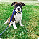 Adopt A Pet :: Thackery Binx