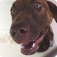 Adopt A Pet :: Rubble 5407 - Columbus, GA