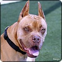 Adopt A Pet :: Ranger - Vista, CA