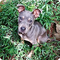 Adopt A Pet :: Pal - Allen town, PA