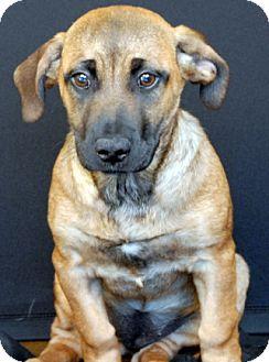 German Shepherd Dog Mix Dog for adoption in Newland, North Carolina - Ruby