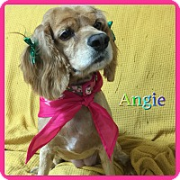 Adopt A Pet :: Angie - Hollywood, FL