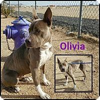 Adopt A Pet :: Olivia - California City, CA