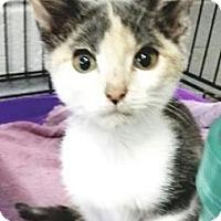 Adopt A Pet :: Baby Houdini - Paducah, KY