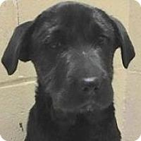 Adopt A Pet :: Mike - Springdale, AR