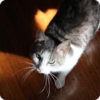 Adopt A Pet :: Eartha Kit - Philadelphia, PA
