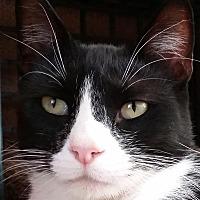 Adopt A Pet :: Brandon - Palo Cedro, CA
