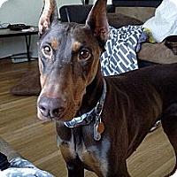 Adopt A Pet :: Reba - New Richmond, OH