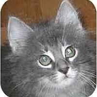 Adopt A Pet :: Optina - Lombard, IL