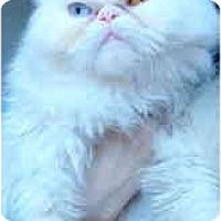 Adopt A Pet :: Kali - Davis, CA