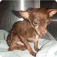 Adopt A Pet :: Bug-3 lbs - Chimayo, NM