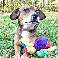 Adopt A Pet :: Fletcher - Mocksville, NC