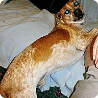 Adopt A Pet :: Spooky - Silsbee, TX