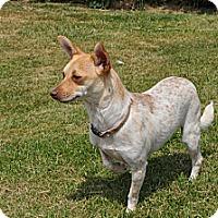 Adopt A Pet :: Sparkels - Tumwater, WA