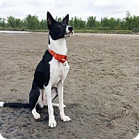 Adopt A Pet :: Link - Saskatoon, SK