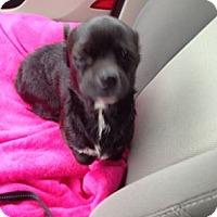 Adopt A Pet :: Tallie - Vidor, TX