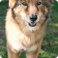 Adopt A Pet :: Kita - Sacramento, CA
