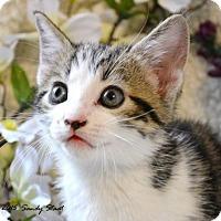 Adopt A Pet :: Swipper (Uh Huh) - Little Rock, AR