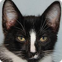 Adopt A Pet :: Chase - Buena Park, CA