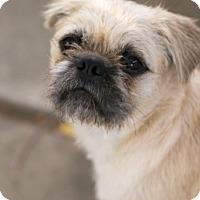 Adopt A Pet :: Leo - Pismo Beach, CA