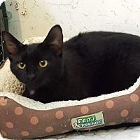 Adopt A Pet :: Vader - Covington, KY
