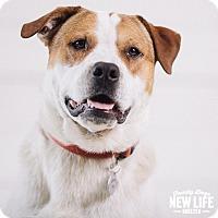 Adopt A Pet :: Smith - Portland, OR