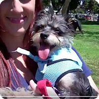 Adopt A Pet :: see video Hillary happy girl - Los Angeles, CA