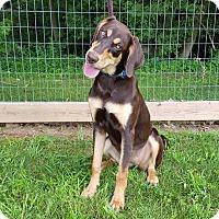 Adopt A Pet :: Cinnamon - New Oxford, PA
