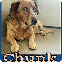 Basset Hound/Blue Heeler Mix Dog for adoption in Edwards AFB, California - Chunk