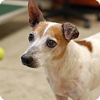 Adopt A Pet :: Travis - Nashville, TN