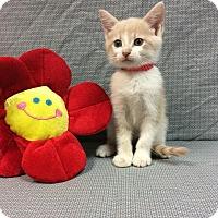 Adopt A Pet :: Katie - Moody, AL