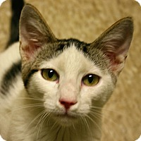 Adopt A Pet :: Smudge - Hastings, NE