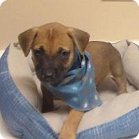 Adopt A Pet :: Haley - Lebanon, ME