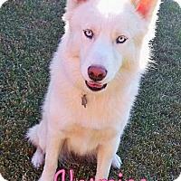 Adopt A Pet :: Yasmine--Coming soon! - Carrollton, TX