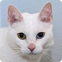 Adopt A Pet :: Snuggles - Prescott, AZ