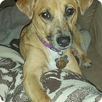 Adopt A Pet :: Piper - Romeoville, IL