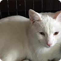 Adopt A Pet :: JB (Junebug) - Middletown, OH